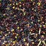 Olio d'ulivo di Alta-Provenza